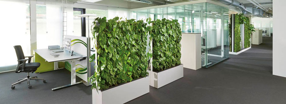 Pflanzen-Trennwände für besseres Raumklima